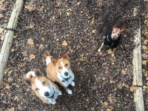 trouver pet sitter geneve