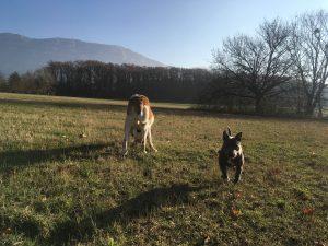 faire courir son chien Bardonnex