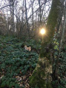 balade forêt, bois canton geneve