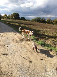 pawalk chien