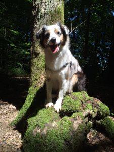promeneur chien geneve