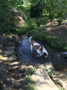 paw walk dogwalking geneve