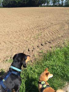 promenade canine geneve veyrier carouge troinex