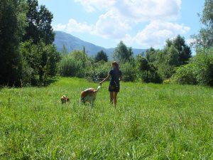 promener animaux genève