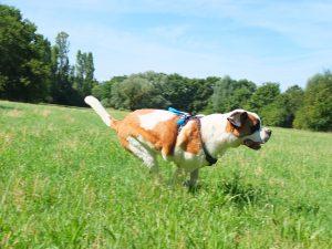 Promeneur canin Genève pawwalk