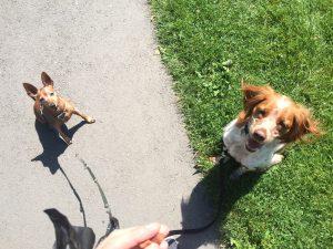 promeneur éducateur chien canin geneve
