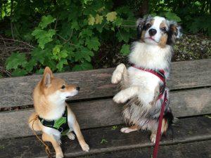 tricks chien geneve