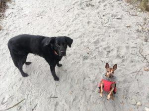 chiens le long de l'Arve