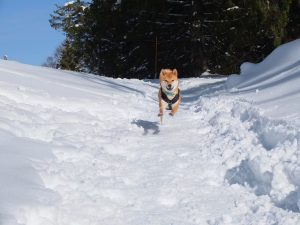 randonnée canine geneve