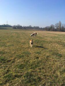 Bistoquette chiens Genève